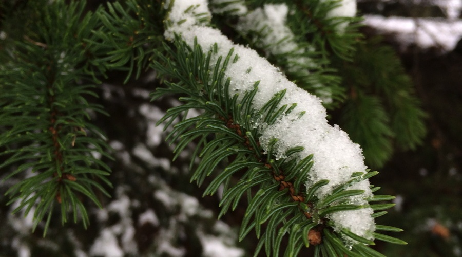 First Snow of the Year | Reghan Skerry