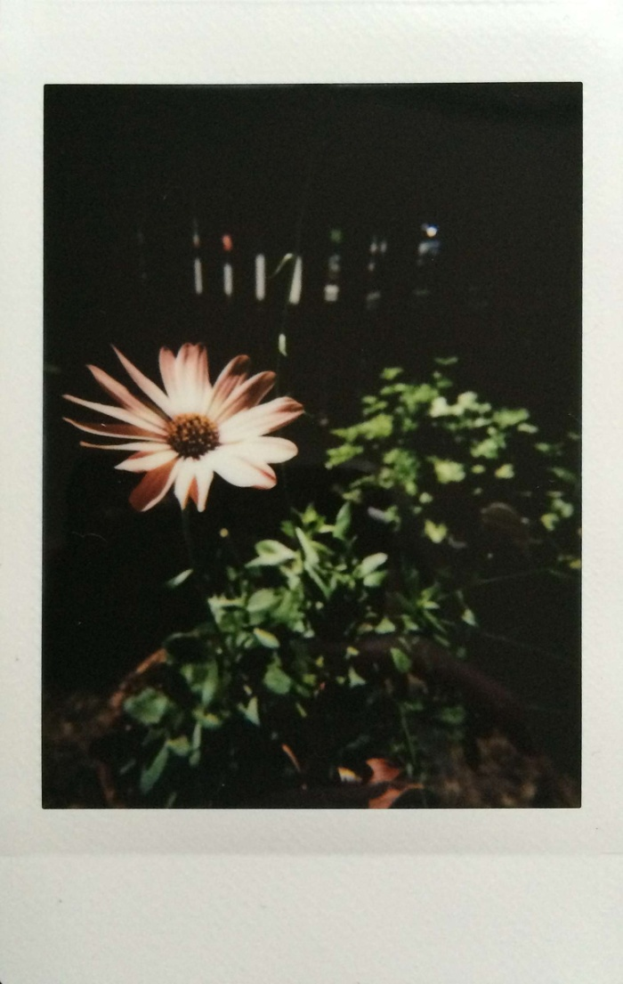 "2016 Weekly Photo Challenge: ""27. Analog"" 