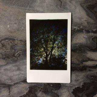 2017 Project365 #152   Reghan Skerry