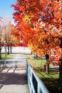 Montréal, Canada (October 2015)   Reghan Skerry