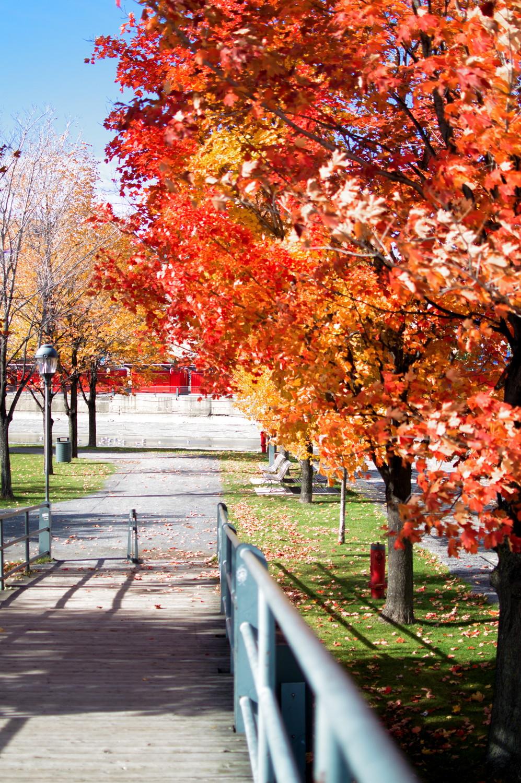 Montréal, Canada (October 2015) | Reghan Skerry