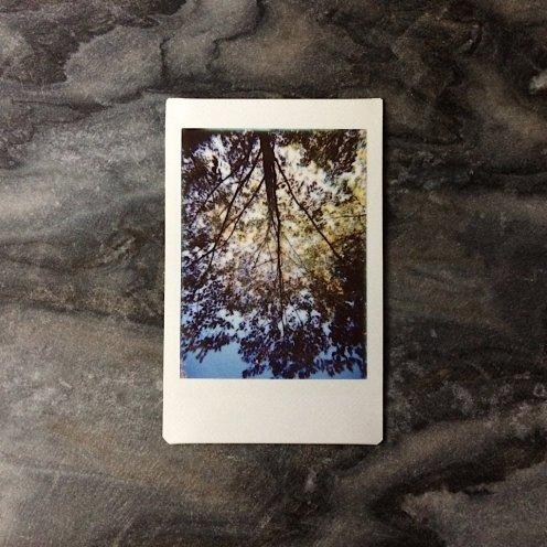 2017 Project365 #297 | Reghan Skerry