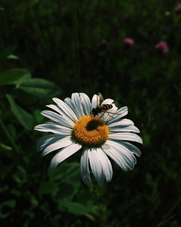 Busy Bee | Reghan Skerry