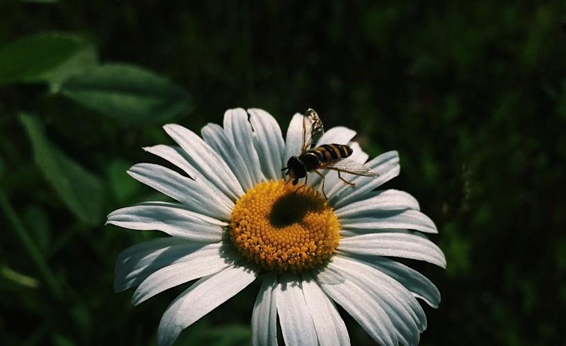 Busy Bee | Reghan Skerry