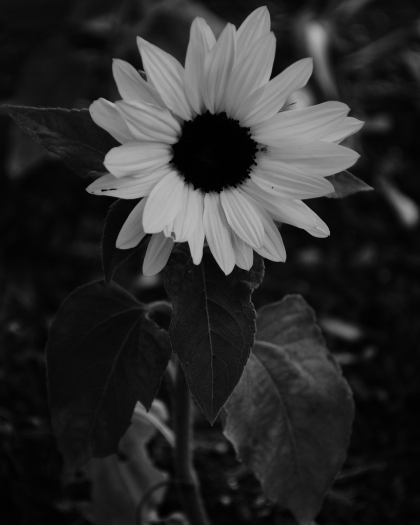 100 Days of Black & White: Day 88 | Reghan Skerry