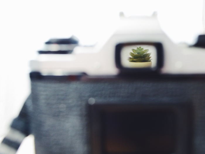 Close-up of a camera, with a plant visible through the viewfinder. Photo by Reghan Skerry.