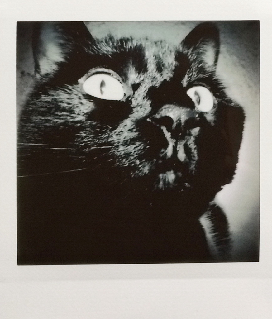 Instax square photo of a black cat named Lucy by Reghan Skerry