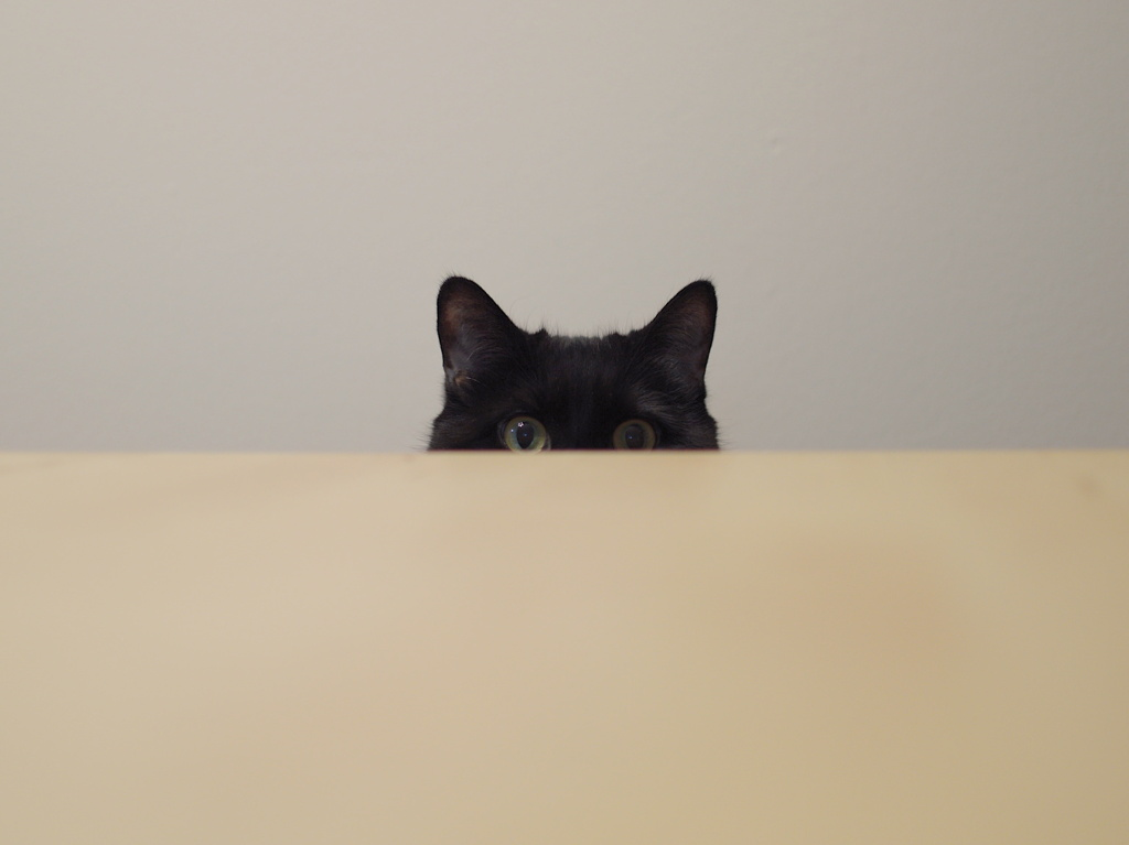 A black cat peeking over the edge of a table by Reghan Skerry