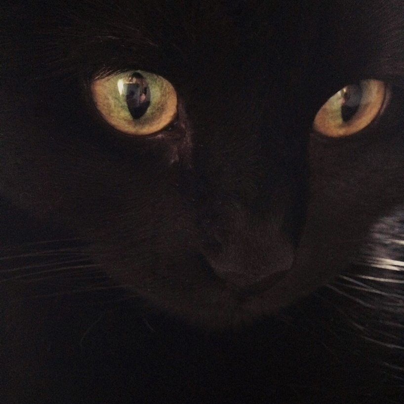 Close up of a black cat's face, photographed by Reghan Skerry