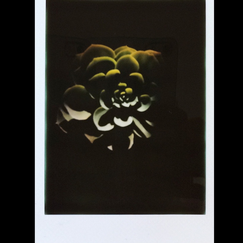 Instax mini photo of a succulent in heavy shadow, photographed by Reghan Skerry