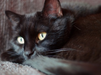 Black cat, photographed by Reghan Skerry.