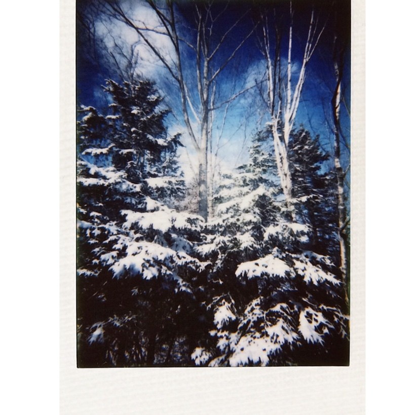 Instax mini photo of snow on evergreen trees, photographed by Reghan Skerry.