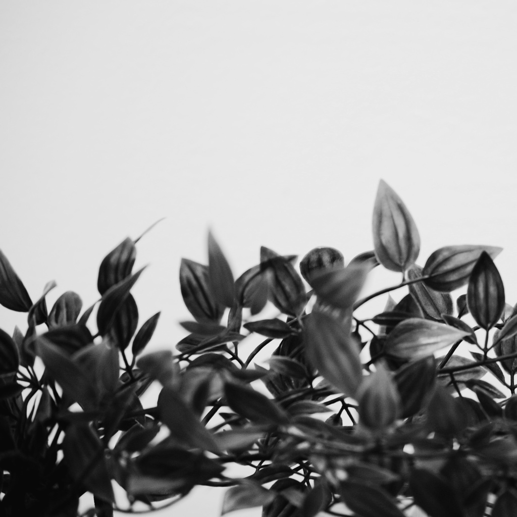 Black and white photo of leaves on a white background, by Reghan Skerry.
