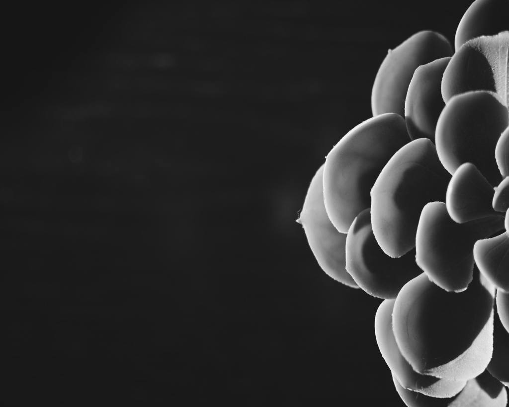 Black and white photo of a succulent, by Reghan Skerry.