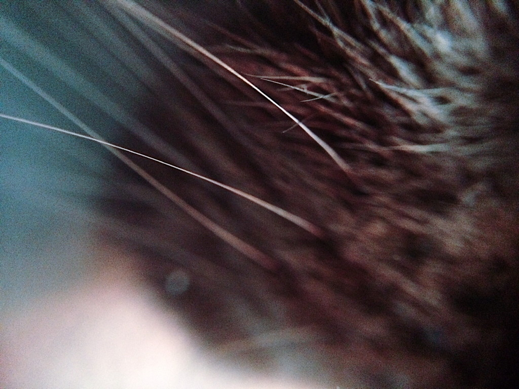 Close up of cat's whiskers. Photo by Reghan Skerry.