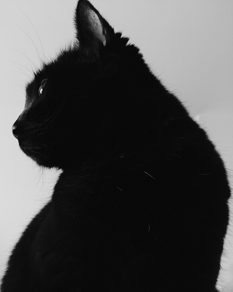 A black cat looking off-frame, in black and white. Photo by Reghan Skerry.