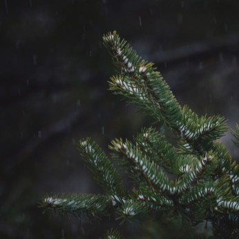 Snow falling on evergreen boughs. Photo by Reghan Skerry.