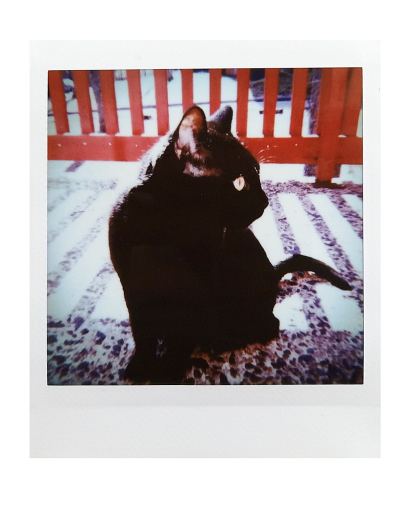 Instax Square photo of a black cat sitting in front of a balcony railing. Photo by Reghan Skerry.