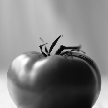 Black and white photo of a tomato, with stem. Photo by Reghan Skerry.