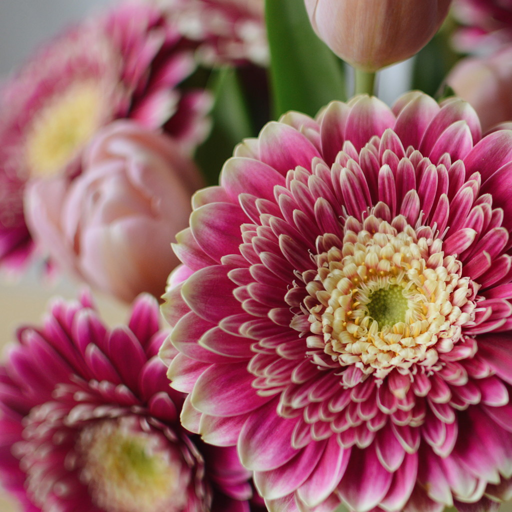 Close-up of a pink bouquet, with gerbera daisies and tulips. Photo by Reghan Skerry.