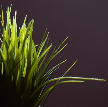 Photo of backlit grass. Photo by Reghan Skerry.