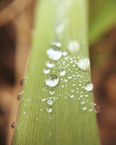 Close up of dew drops on a blade of grass. Photo by Reghan Skerry.