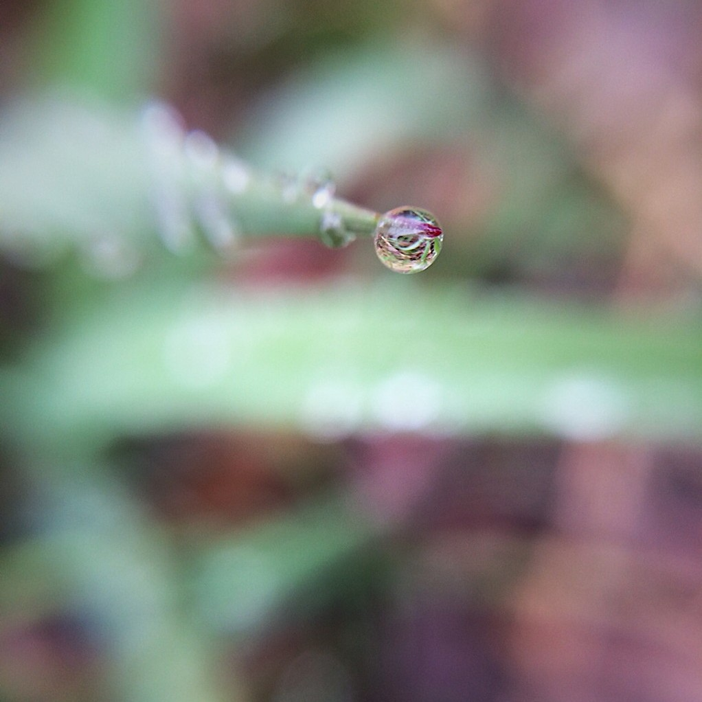 Close-up photo of a single drop of water on a blade of grass, with a blurred background. Photo by Reghan Skerry.