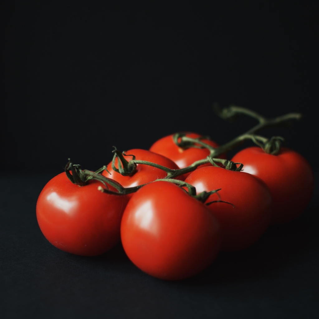 Tomato vine against a black background. Photo by Reghan Skerry.