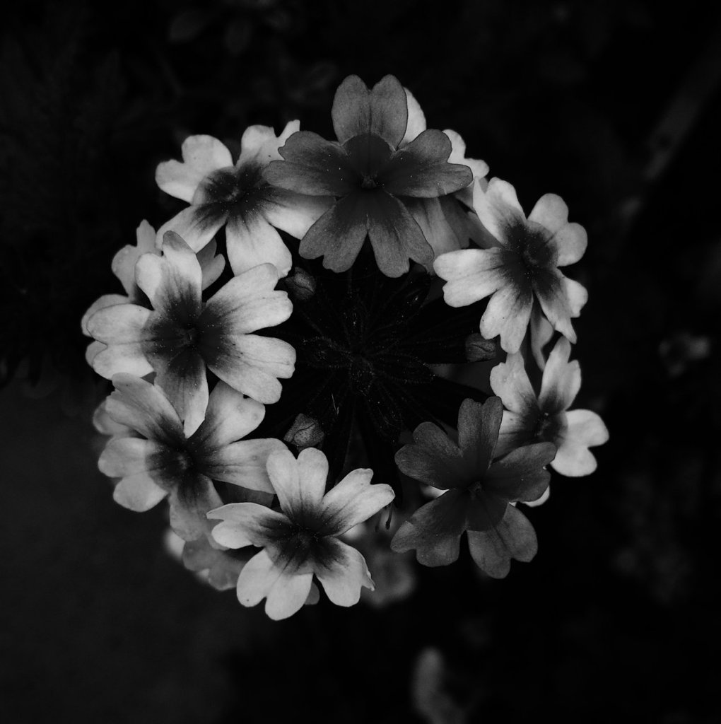 Black and white photo of a circle of flowers. Photo by Reghan Skerry.