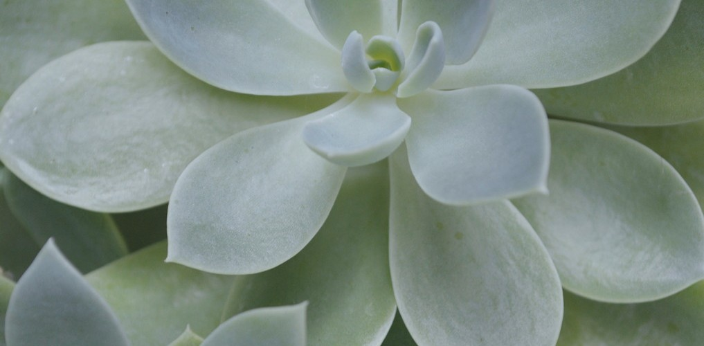 Close up of succulent plants. Photo by Reghan Skerry.
