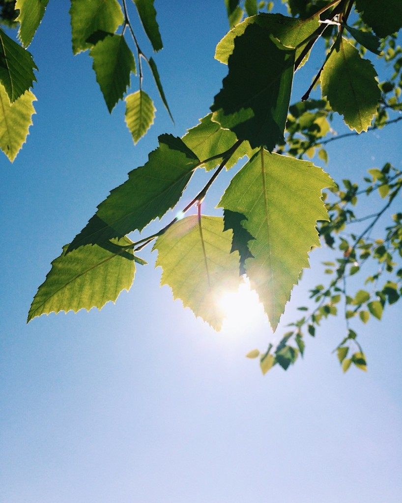 Sunlight through leaves. Photo by Reghan Skerry.