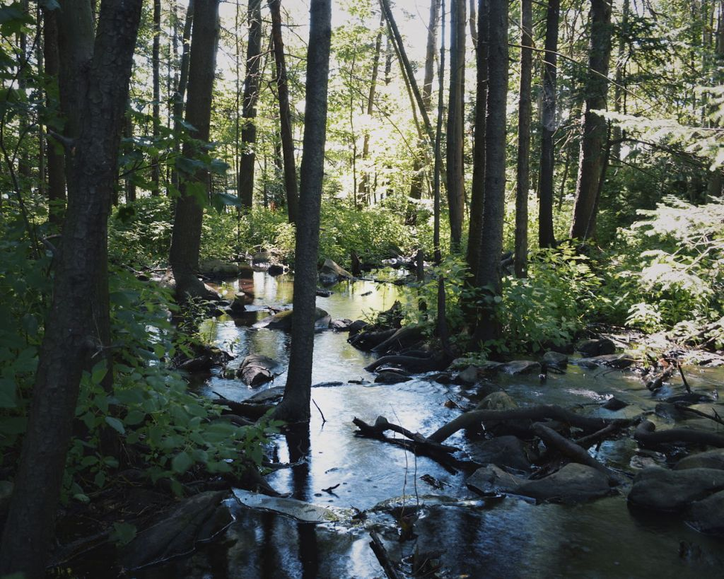 Forest stream with sunlight through the trees. Photo by Reghan Skerry.