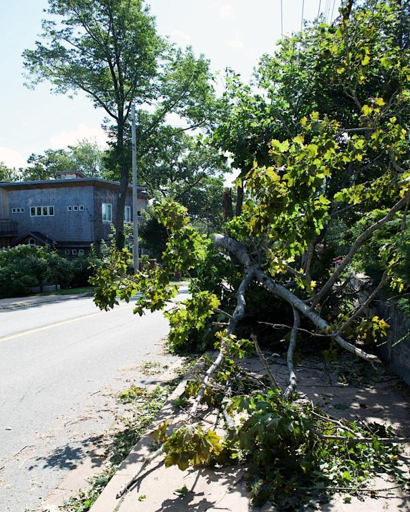 Tree fallen over the sidewalk, after Hurricane Dorian. Photo by Reghan Skerry.