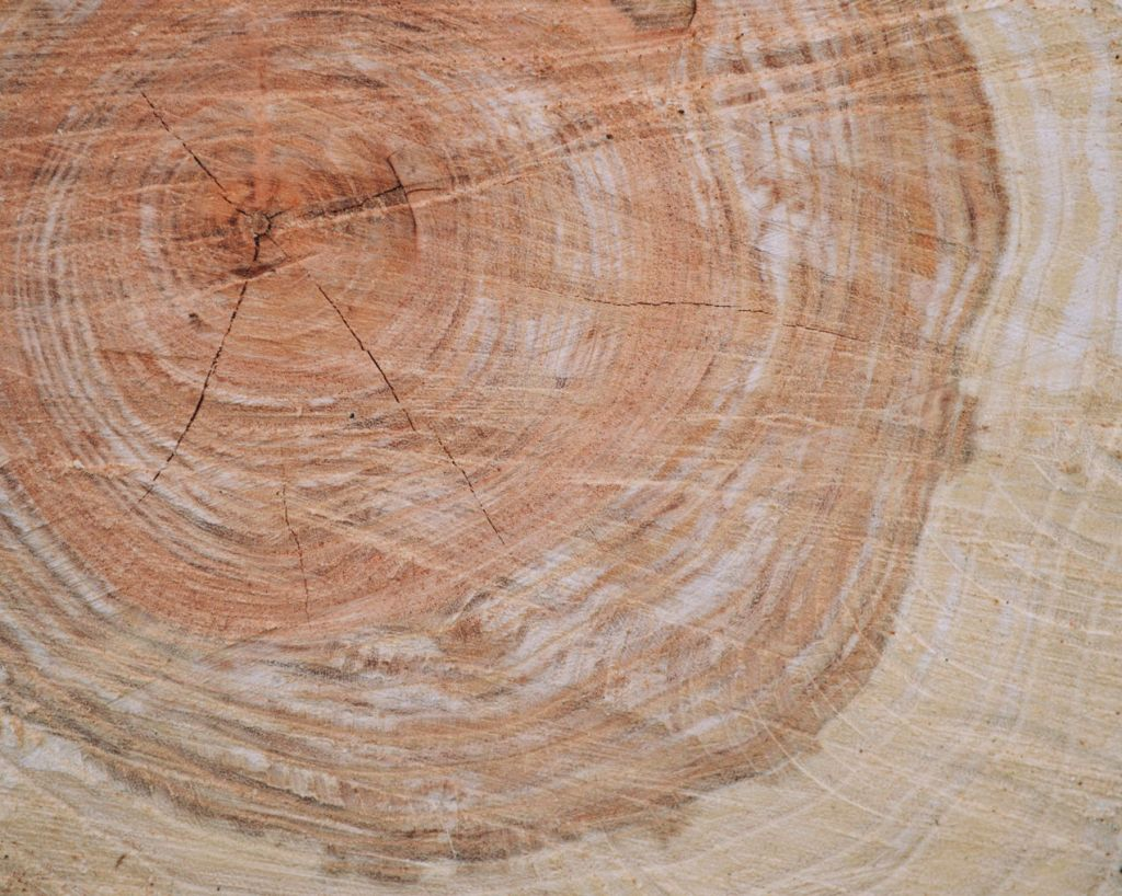 Close up of tree rings. Photo by Reghan Skerry.