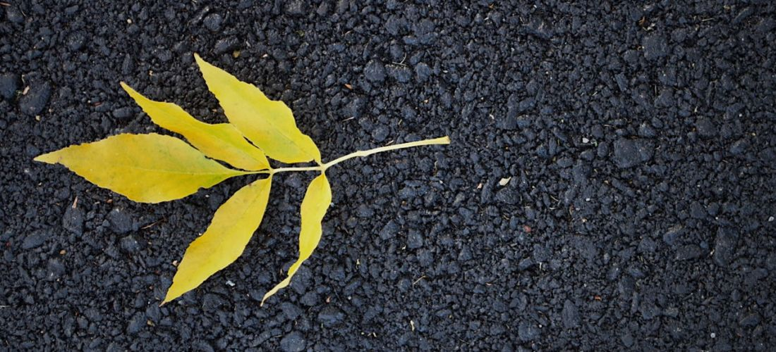 Yellow leaves fallen on black asphalt. Photo by Reghan Skerry.