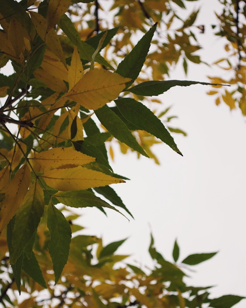 Close up of leaves changing from green to yellow. Photograph by Reghan Skerry.