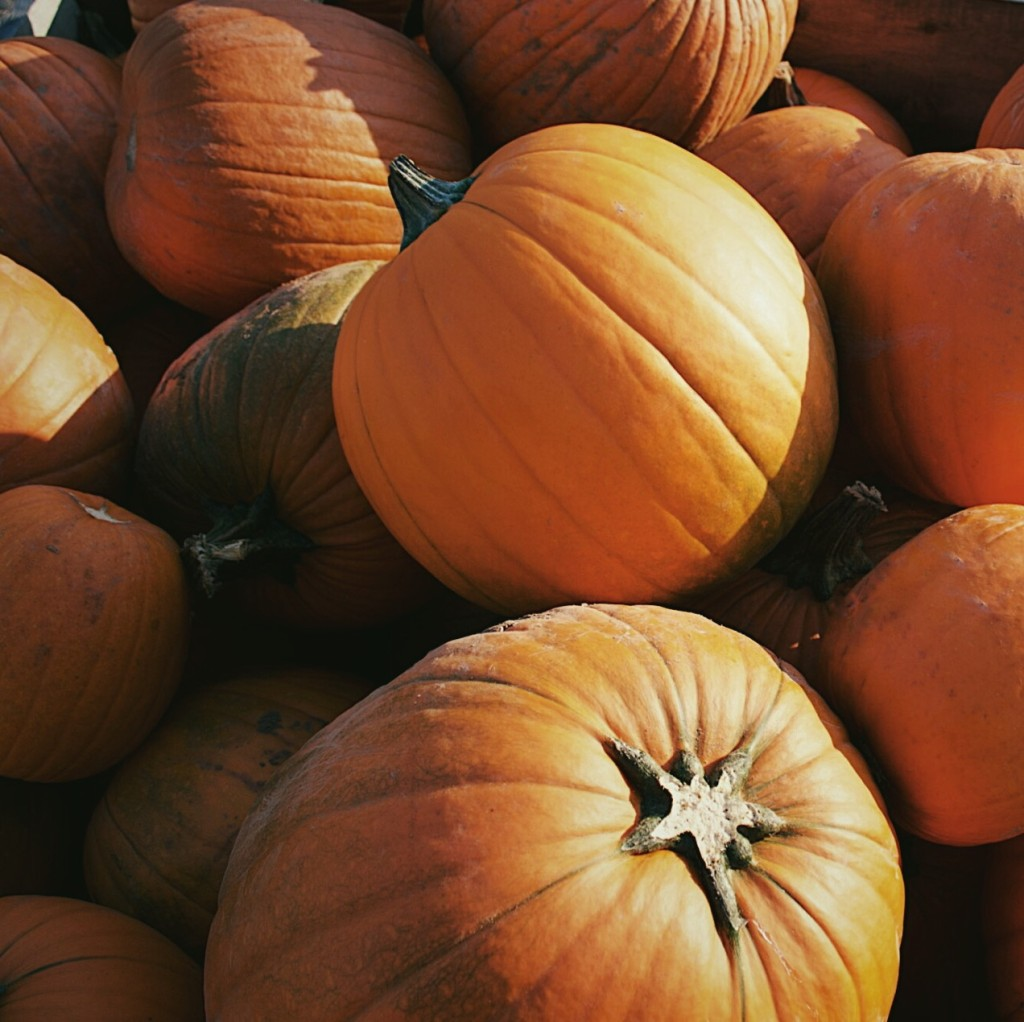 Pumpkins. Photograph by Reghan Skerry.