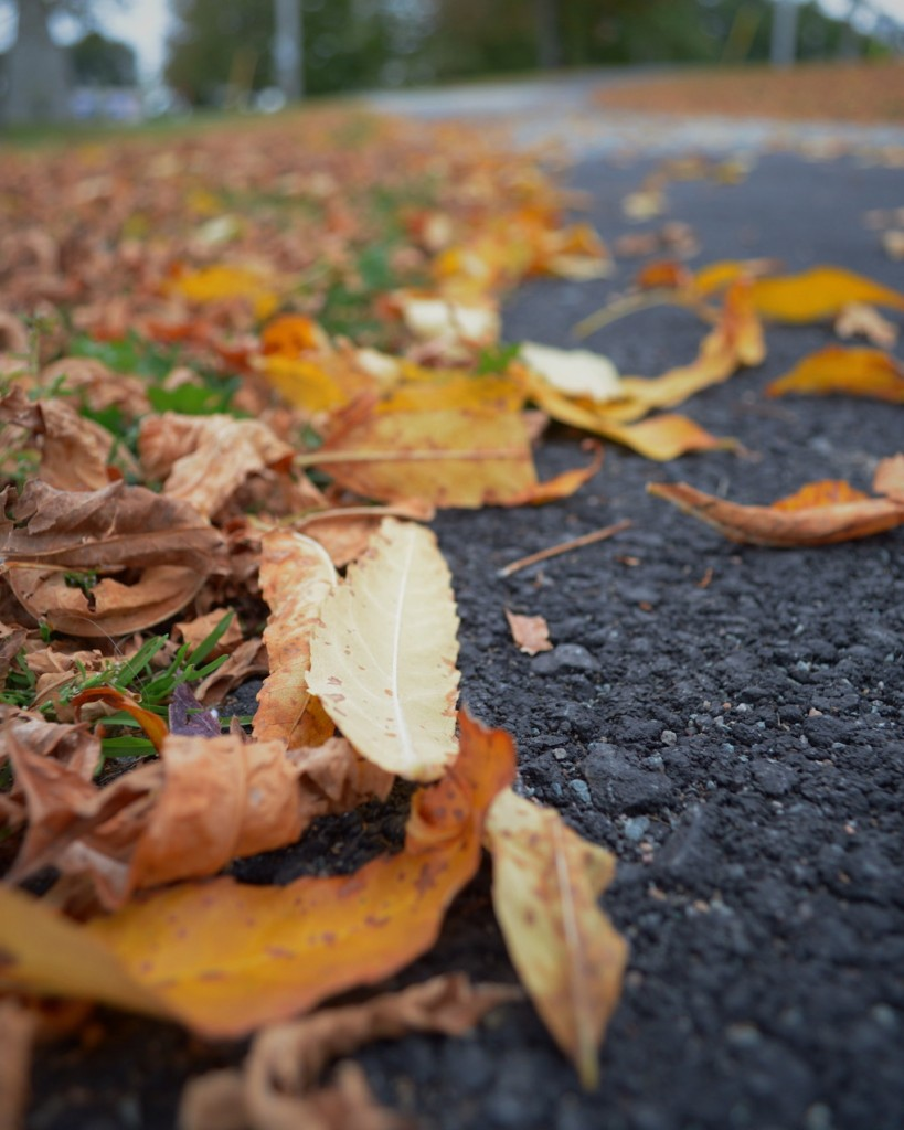 Low-angle photo of autumn leaves on the ground. Photo by Reghan Skerry.