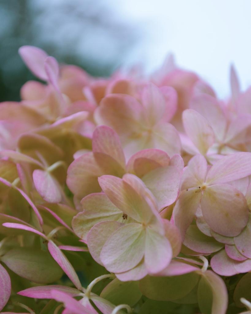 Delicate pink flowers. Photo by Reghan Skerry.