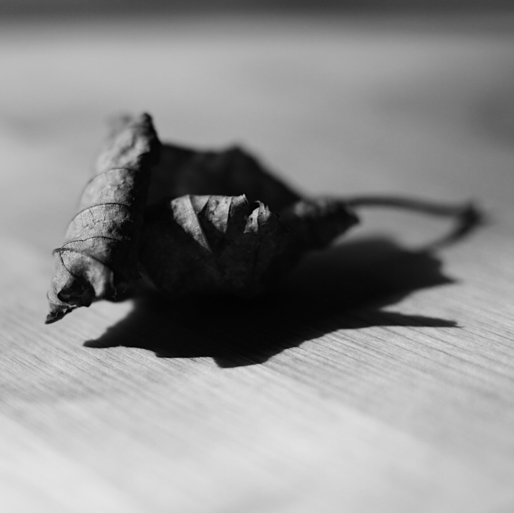 Black and white close-up photo of a dried leaf. Photo by Reghan Skerry.