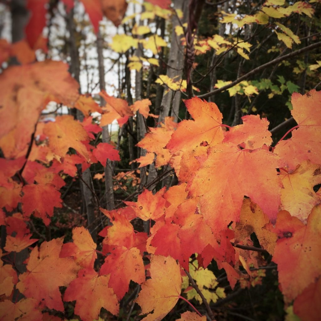 Bright orange autumn leaves. Photo by Reghan Skerry.