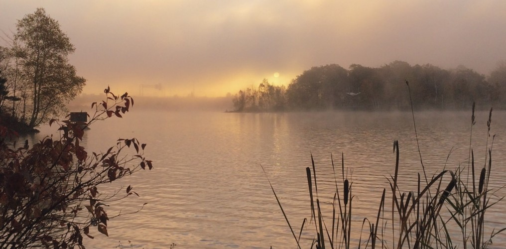 Fog over Lake Bank, at sunrise. Photo by Reghan Skerry.