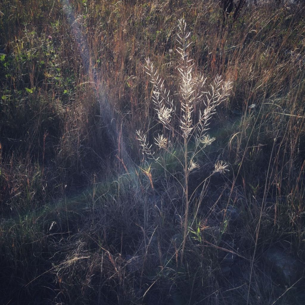 Dried grass. Photo by Reghan Skerry.