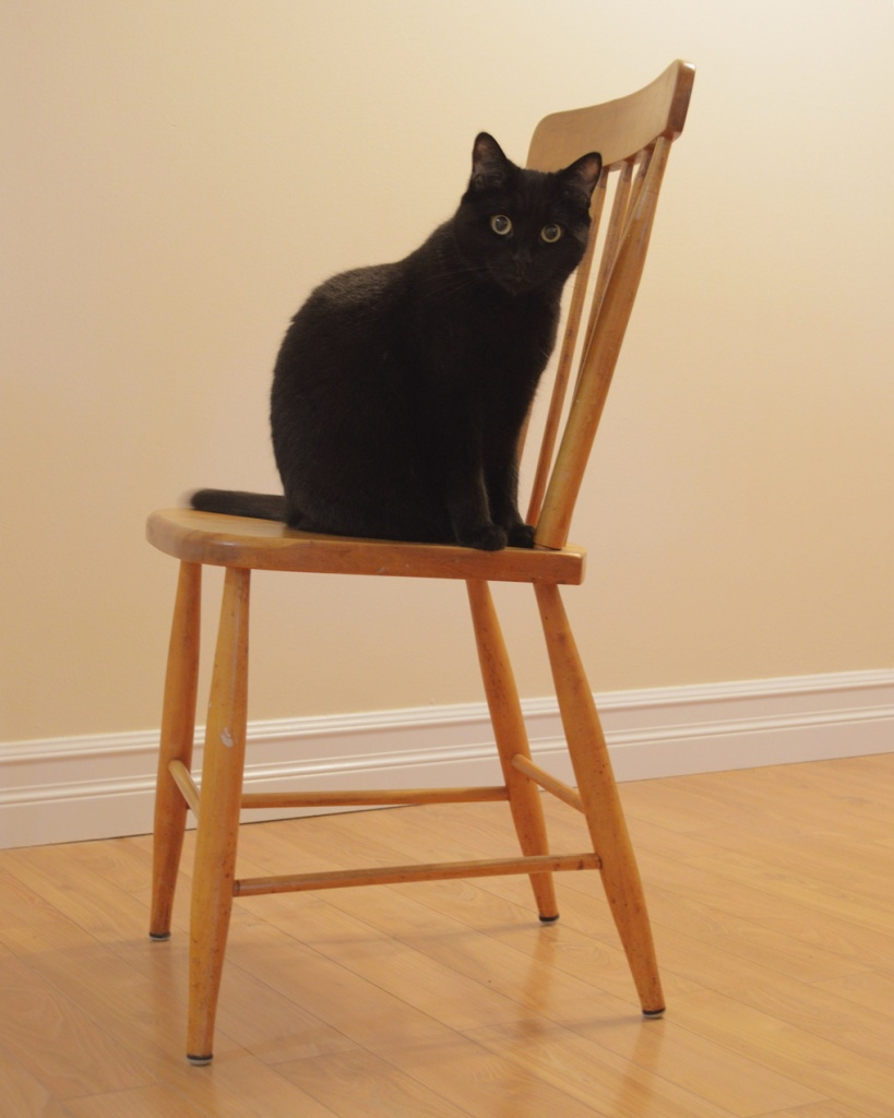 Black cat sitting on a chair. Photo by Reghan Skerry.