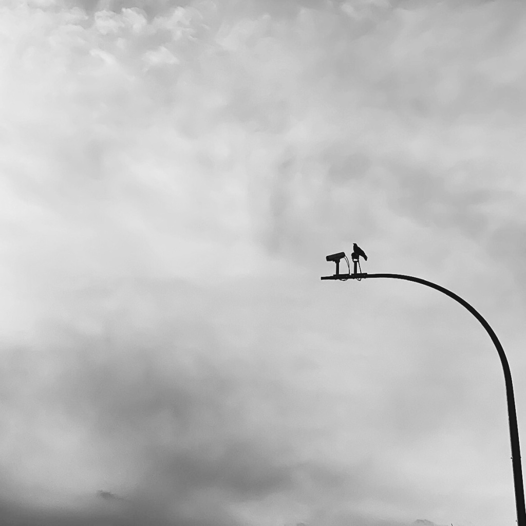 Black and white photo of a crow sitting on a traffic camera. Photo by Reghan Skerry.