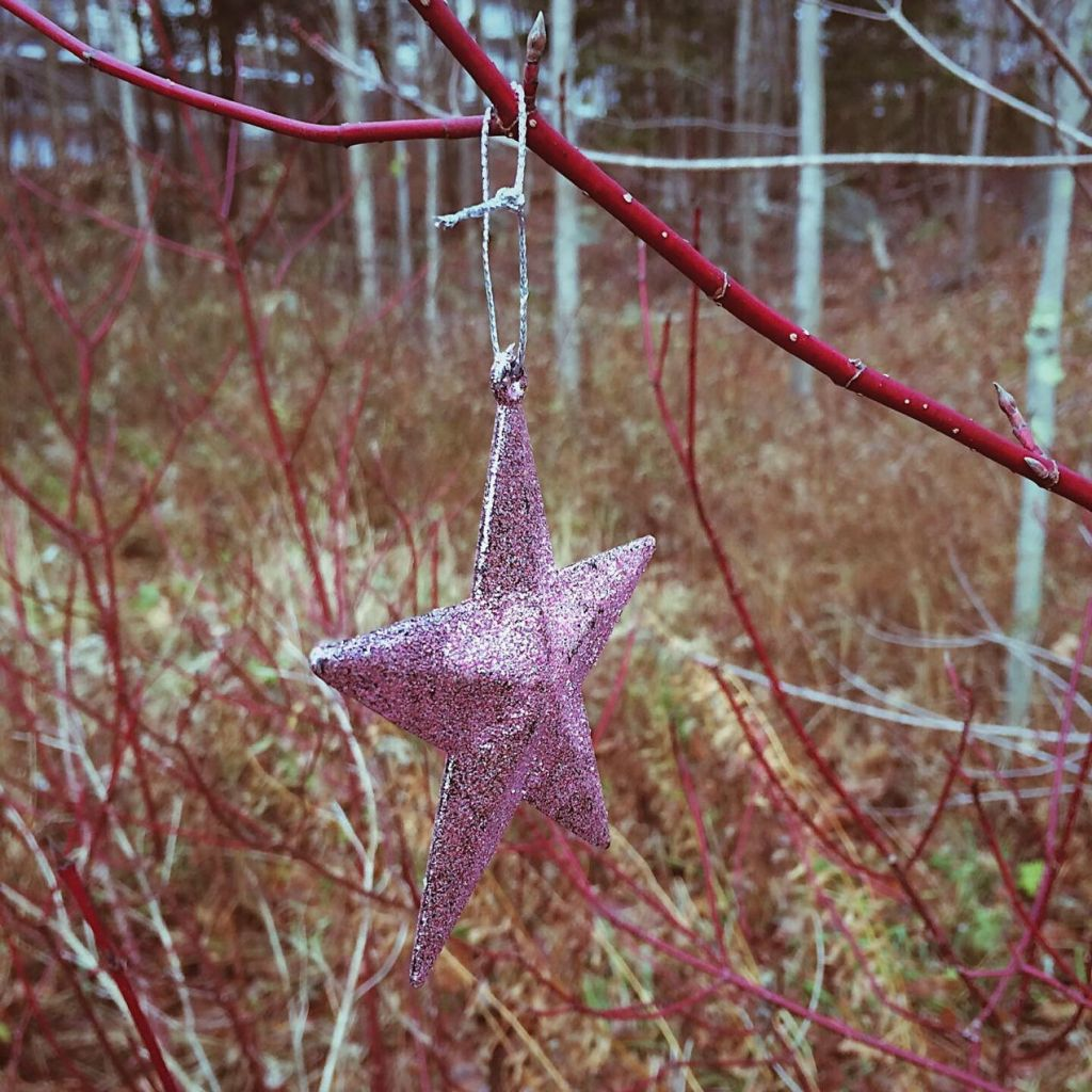 Star ornament hanging from a tree. Photo by Reghan Skerry.