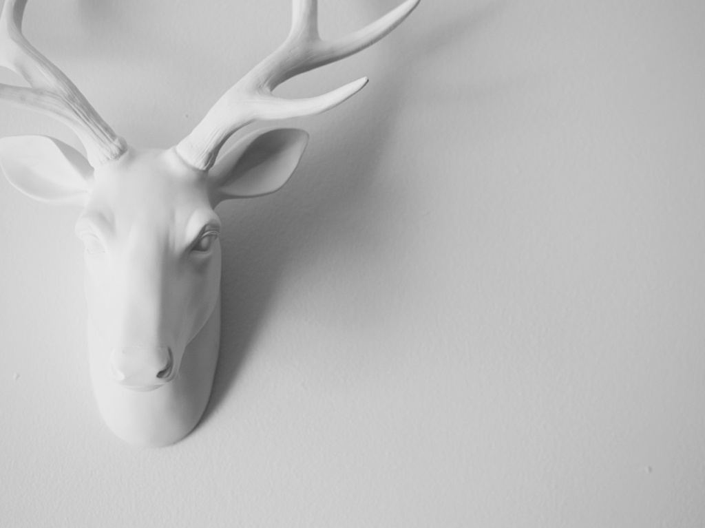 White sculptural deer head on a white wall. Photo by Reghan Skerry.