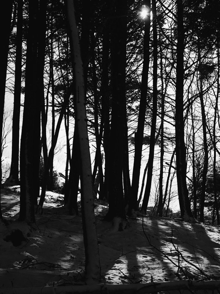 Snowy trees in black and white. Photo by Reghan Skerry.