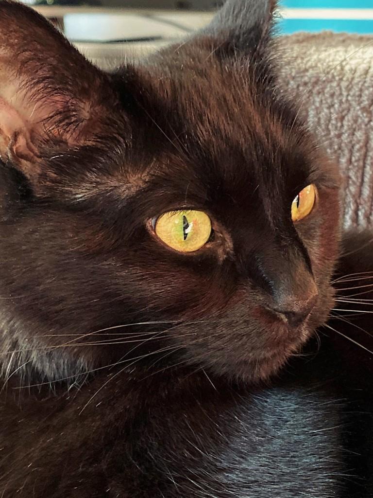 Black cat. Photo by Reghan Skerry.