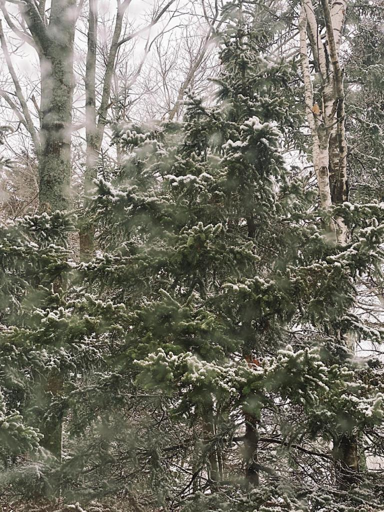 Trees lightly covered with snow, with snow in the air. Photo by Reghan Skerry.